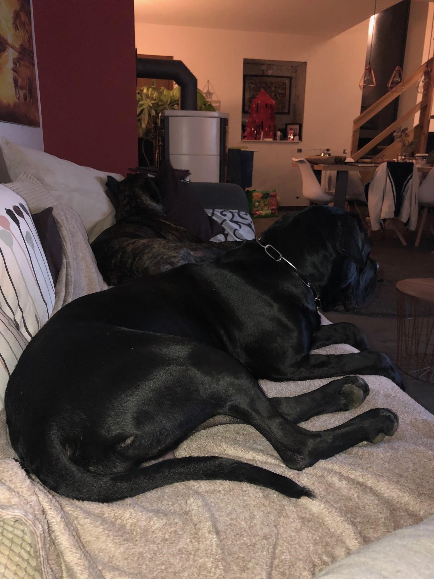 Amadeus & Ari auf der Couch
