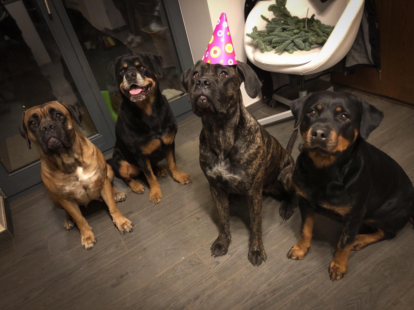 Partygäste