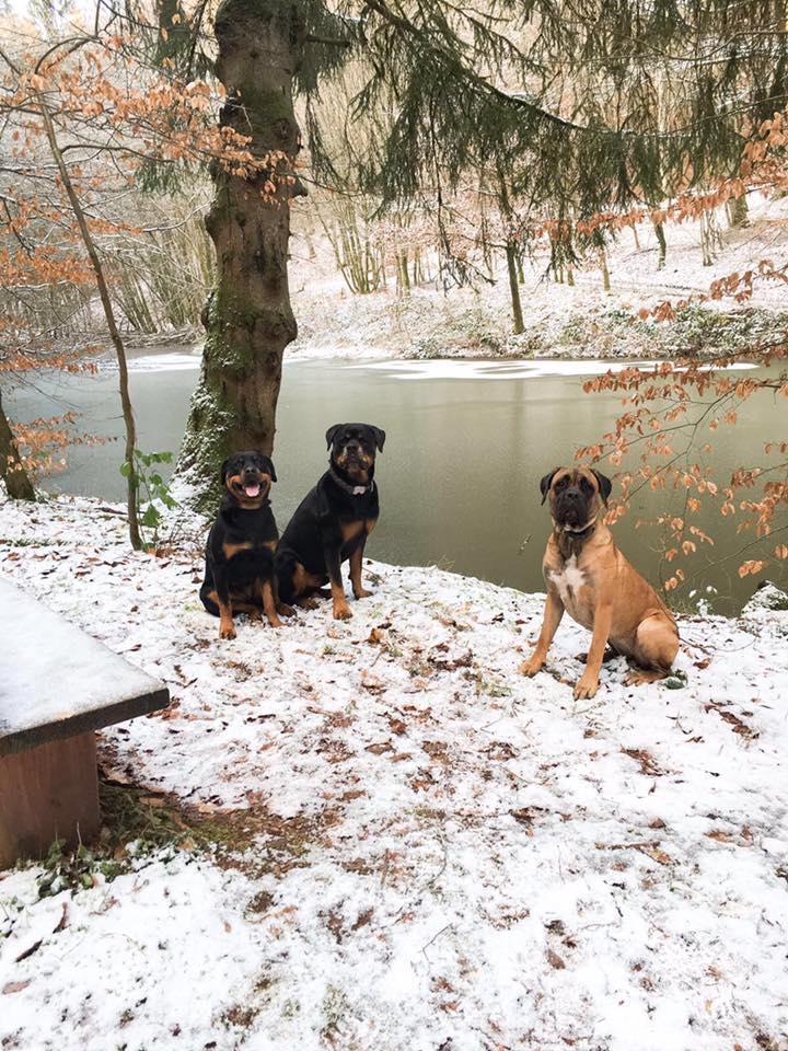 Am zugefrorenen Brandweiher
