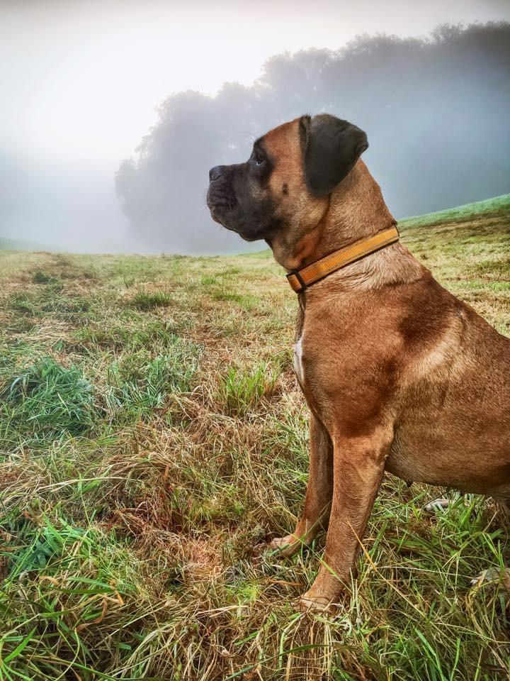 Deema im Nebel