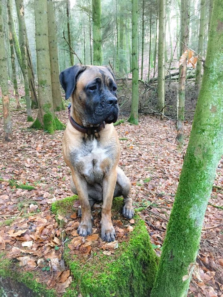 Deema im Wald