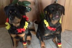 Kira und Balu Fans