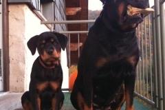 Kira und klein Balu auf der Treppe