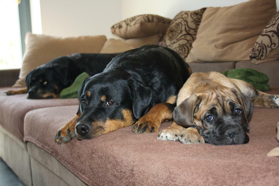 Balu, Evi und Deema auf der Couch