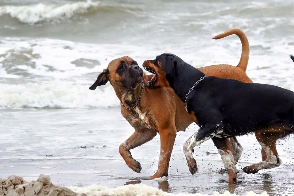 Deema und Evi am Strand