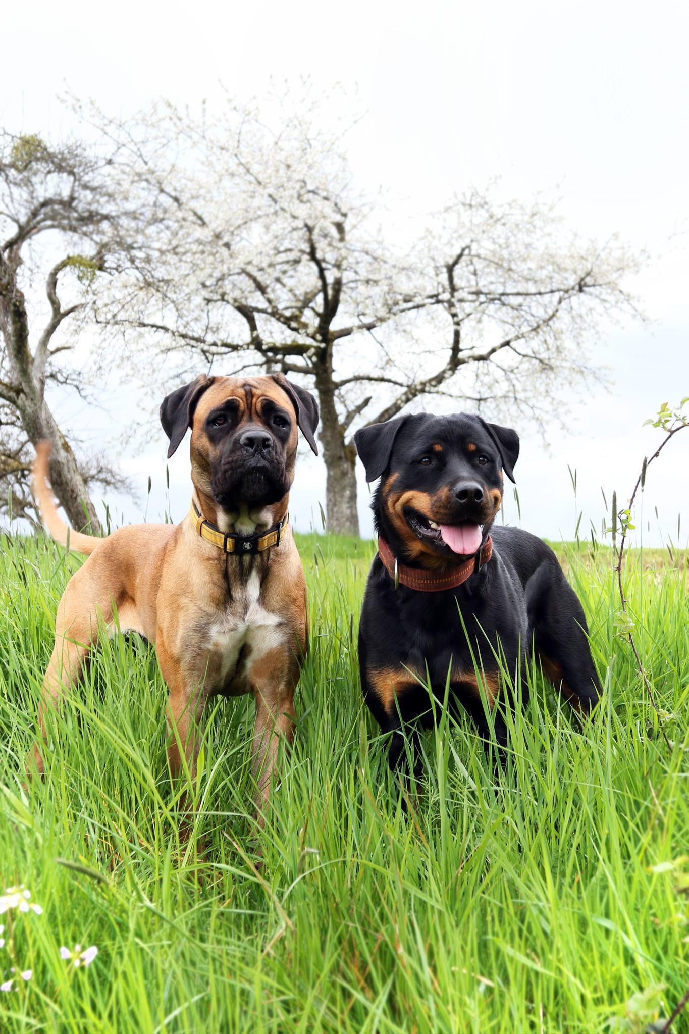 Deema und Evi im Wehinger Land